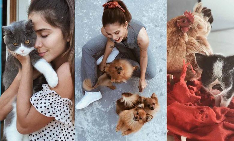 La famosa cantante colombiana ha ganado reconocimiento en redes sociales y en distintos medios, no solo por su talento y belleza, sino por la variedad de mascotas que tiene en su hogar.  La artista tiene varios gatos, perros, pollos, gallinas y hasta un mini pig.