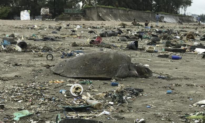 Tortugas mueren en Bangladés atrapadas por residuos plásticos