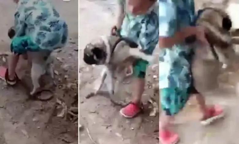 Maltrato animal en Tolima