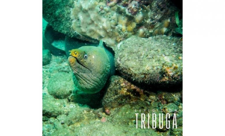 El documental 'Expedición Tribugá' ya está disponible