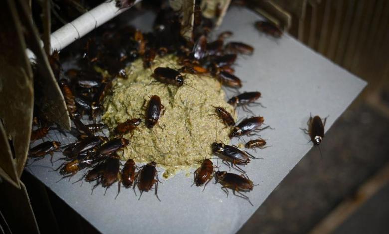 Cucarachas - AFP