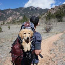 Viaje con mascota