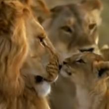 Los usuarios de redes sociales compararon el material con las escenas animadas de 'El Rey León'