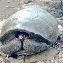 TortugaGigante.jpg