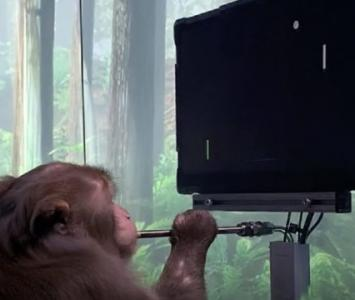 Mono con chip jugando videojuego