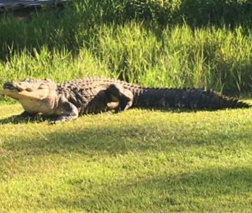 Muere el cocodrilo más famoso del mundo