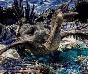 Contaminación Isla Galápagos