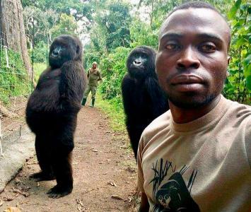Selfie con gorila se toma las redes sociales