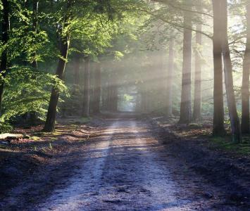 Bosques malditos y misteriosos en El Cartel Paranormal - Junio 22