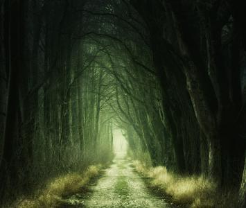 Parálisis del sueño y bosque en El Cartel Paranormal - Agosto 19