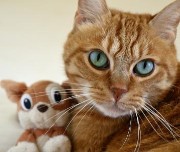 cat-96877_960_720.jpg
